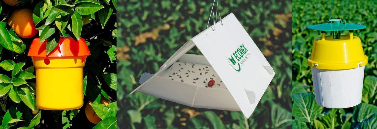 Uso de feromonas y trampas para el control de plagas